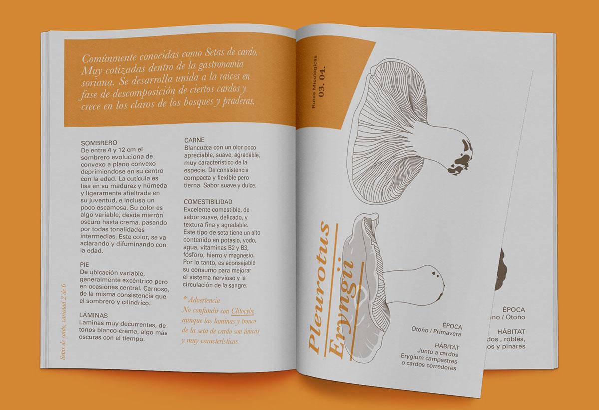 Identidad Corporativa Diseño editorial Ilustración técnica guía micológica