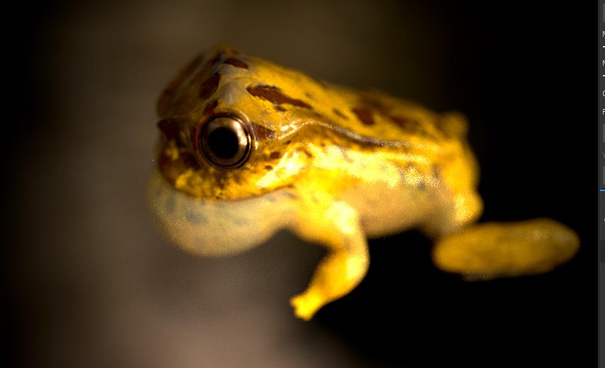 Image may contain: animal, reptile and closeup