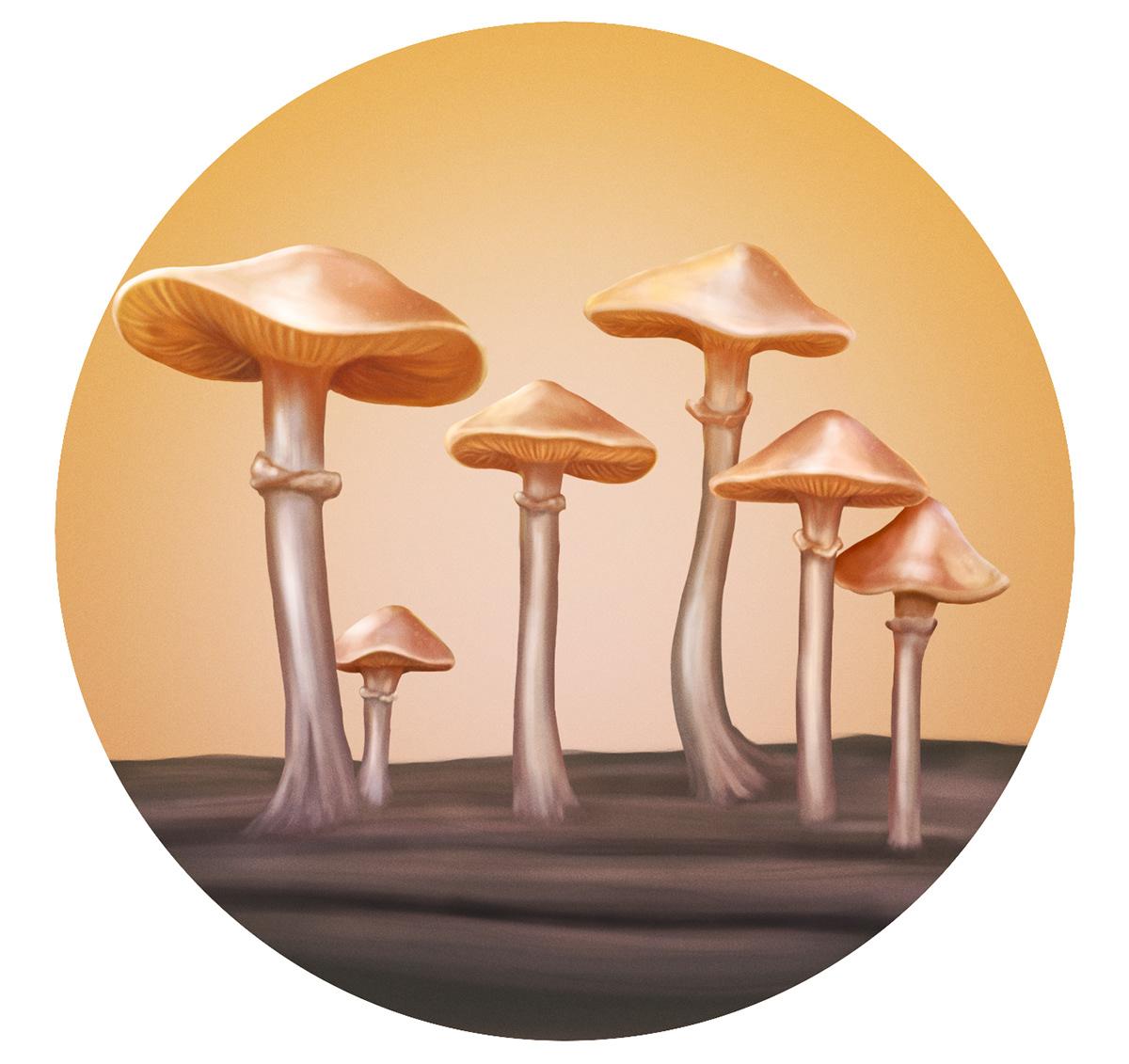 Image may contain: mushroom