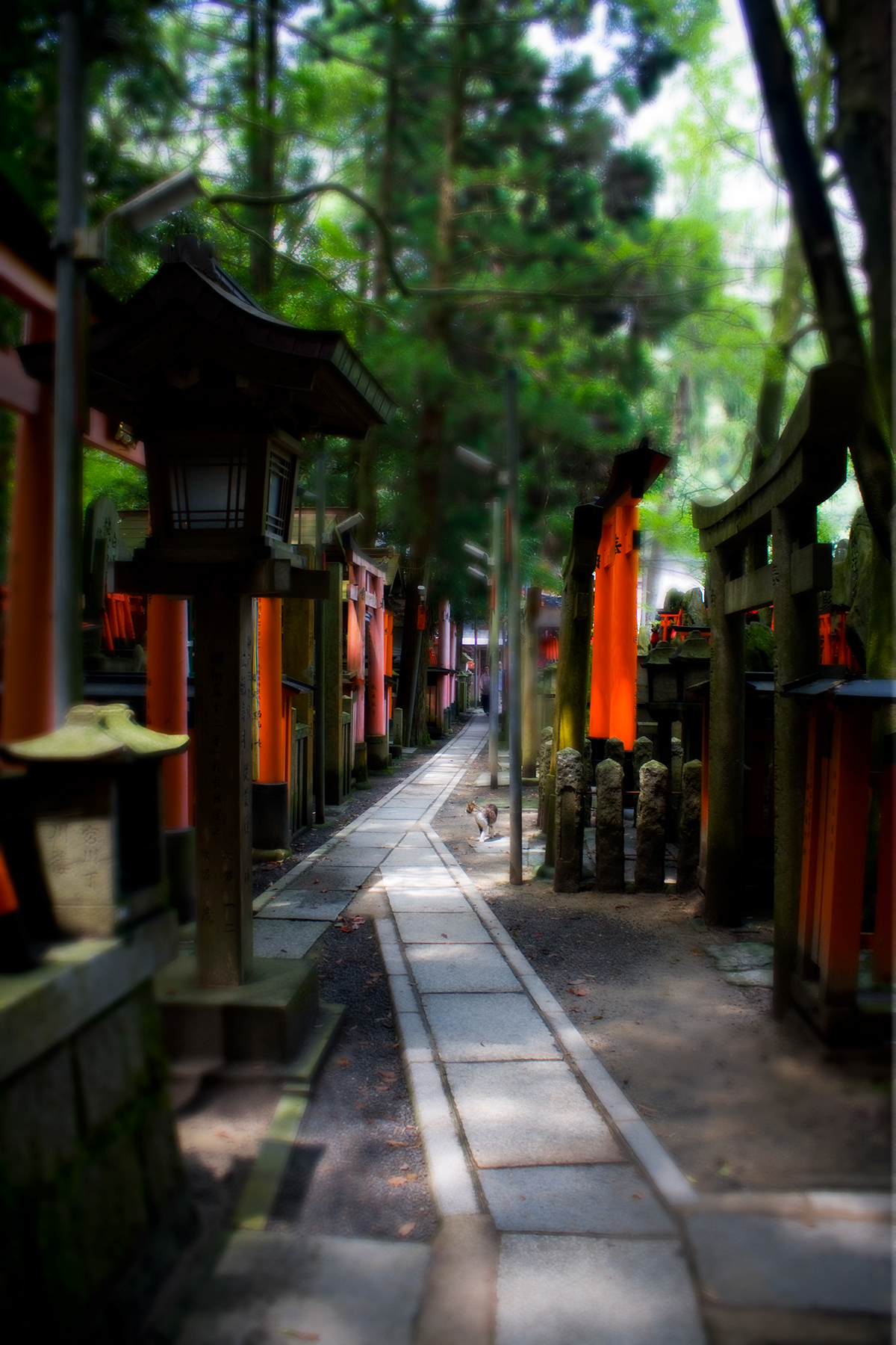 Adobe Portfolio asia fushimi-ku Inari japan kyoto shinto Shrine temple