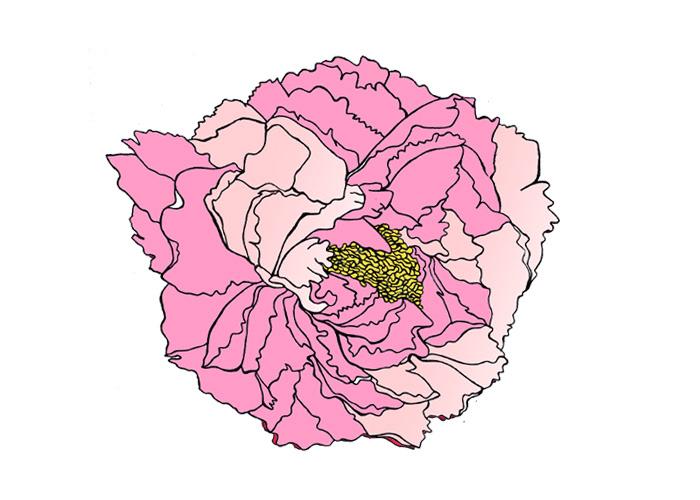 estampa floral desenho de peônias flores japonesas Estampa oriental Vectorillustration Ilustração Vetorial design de produto Direção de arte art direction  annefreitasdesign