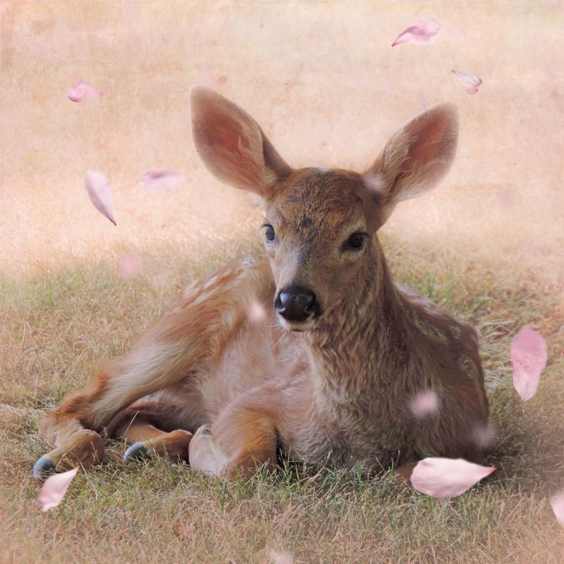 deer fawn petals sakura surreal Magical
