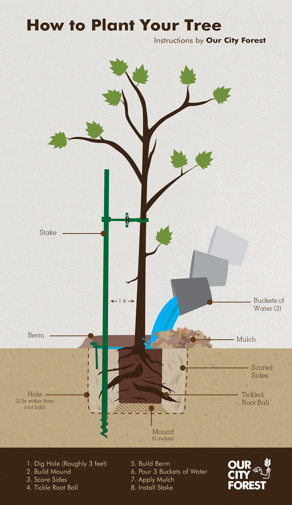 How to plant your tree infographic on behance - Fir tree planting instructions a vigorous garden ...