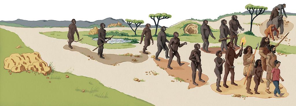 ILLUSTRATION  Paléonthologie archeology presse presse jeunesse children illustration Archeologie