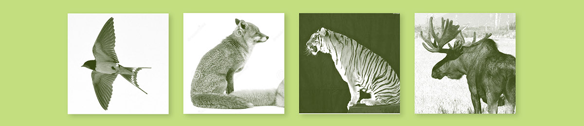 zoo animals animal kingdom dyrenes rike dyrehage logo identity profile trees norway nordic wildlife Park