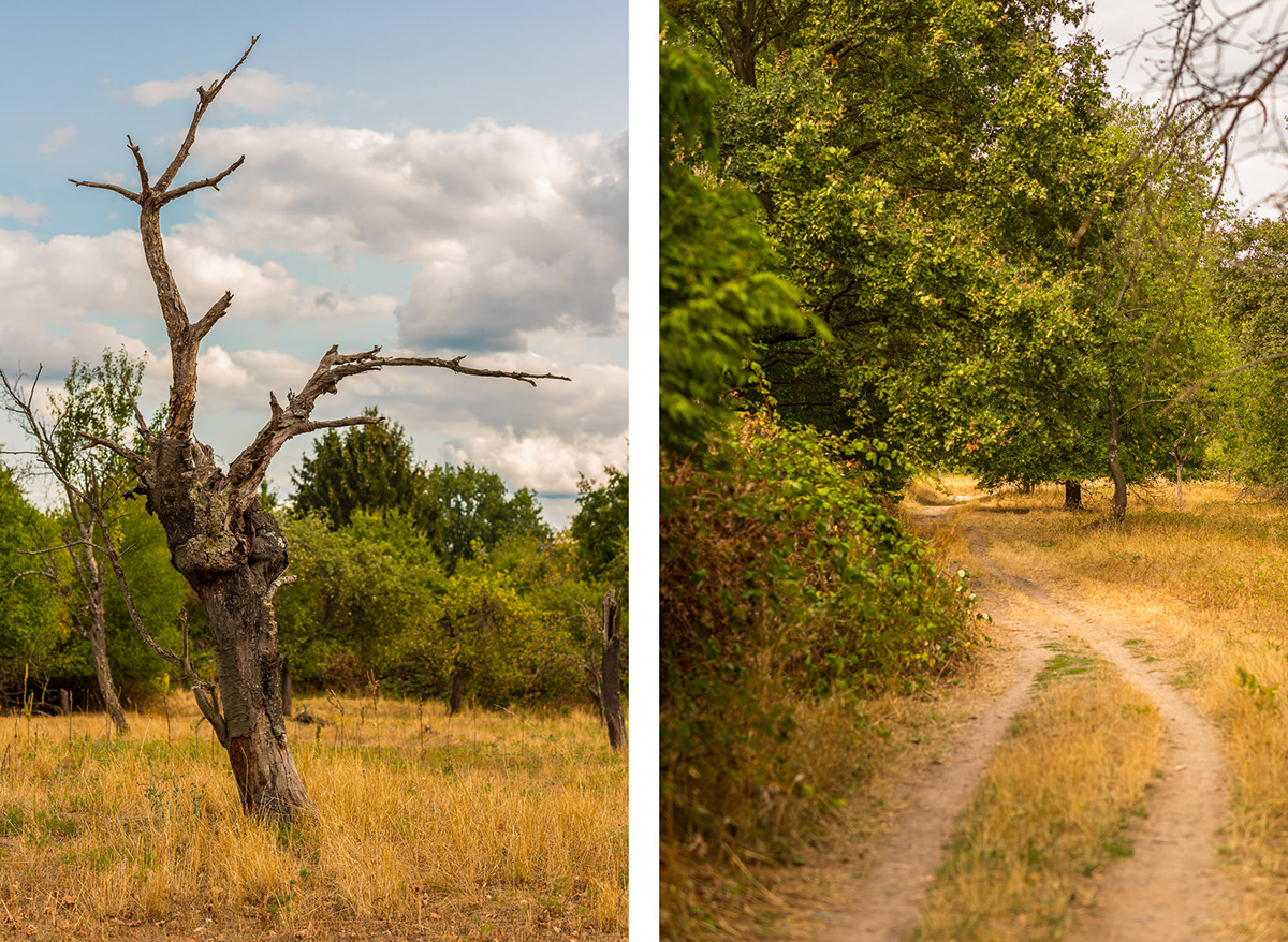 Frankfurt visual storytelling story fotografie Outdoor Landscape Landschaften main dune natur