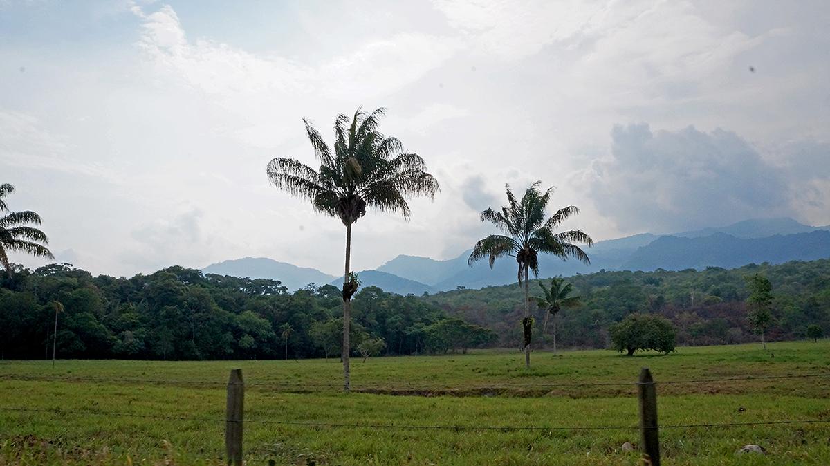 colombia casanare Fotografia