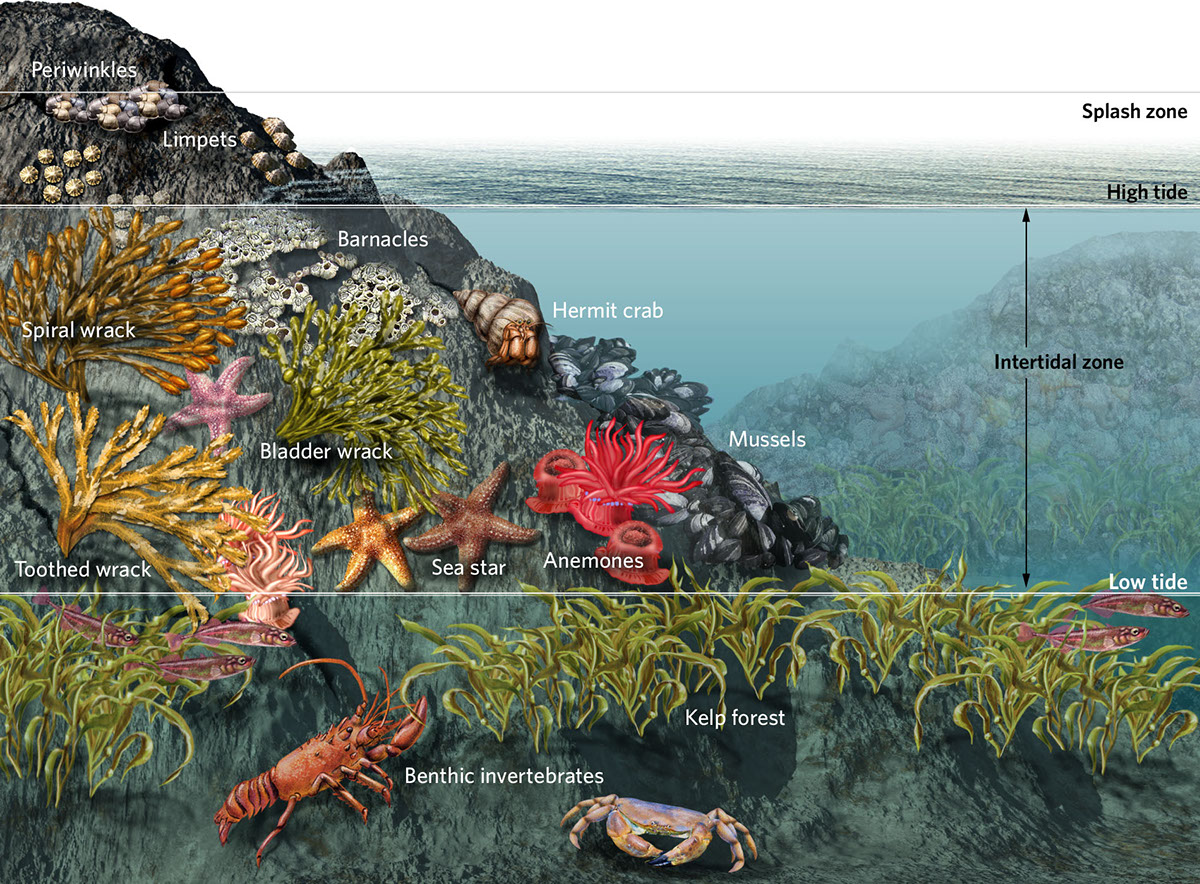 Ocean ecosystems everglades to sea vents on behance for Ecosystem pool