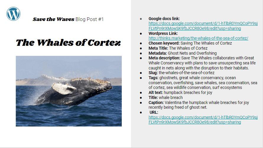 animal sanctuary conservation non-profit oceans surf ecosystem surfer surfer clothing