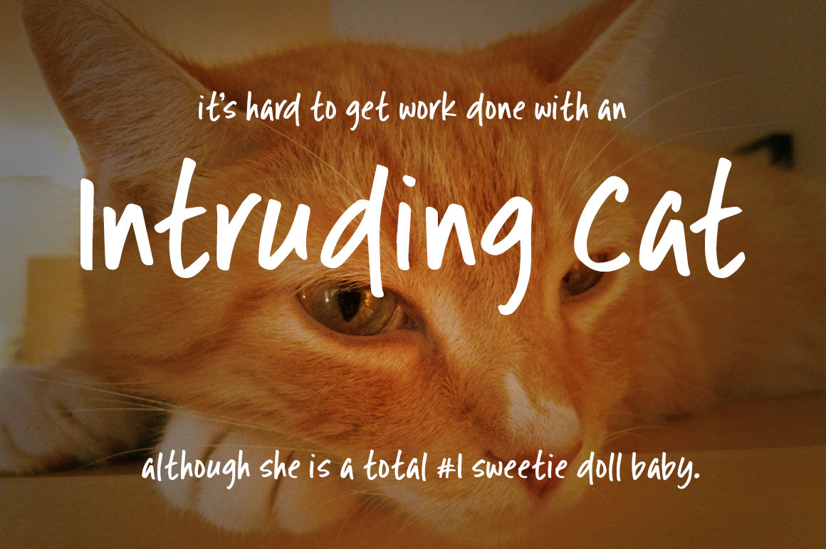 Intruding cat free handwriting font on behance