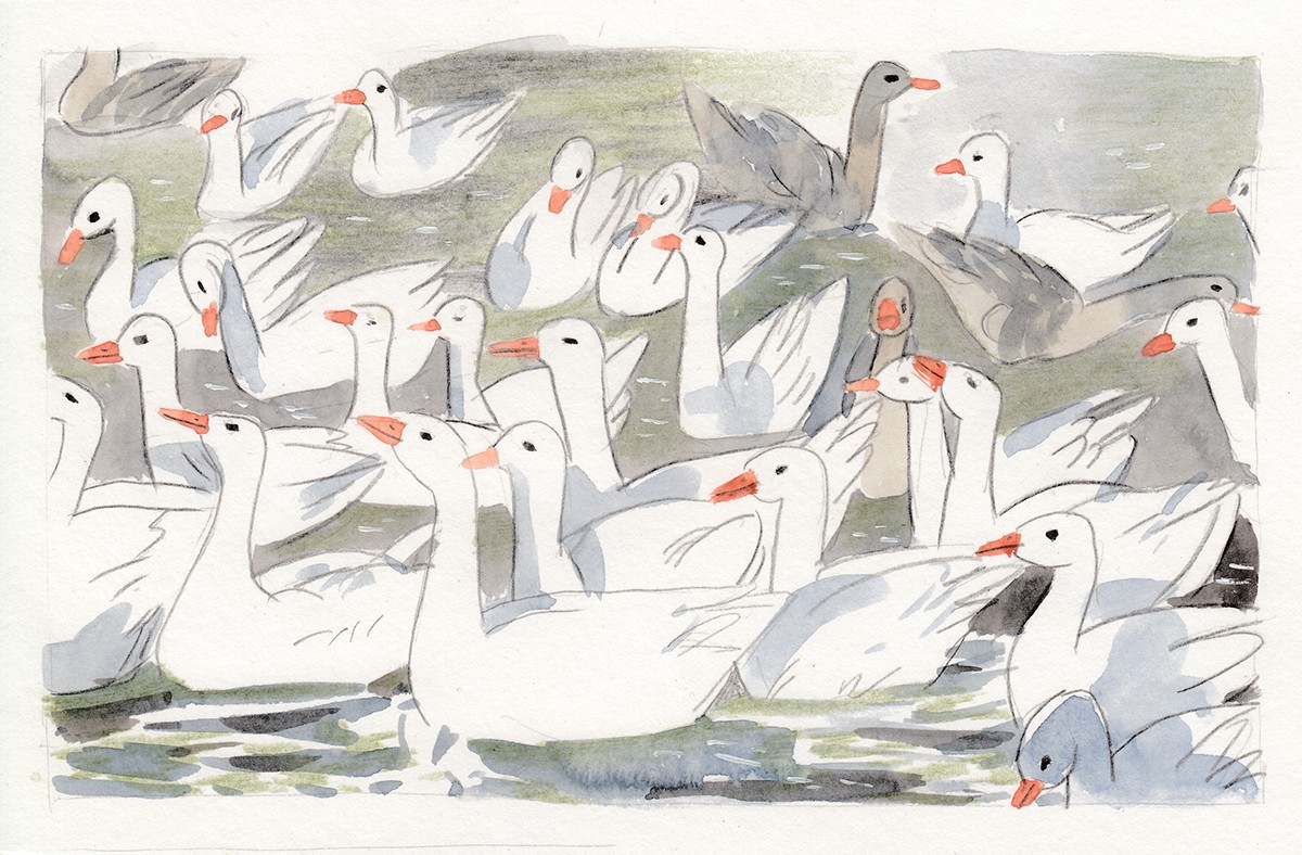 Nature watercolor visual story sasha baranovskaya sashagrime