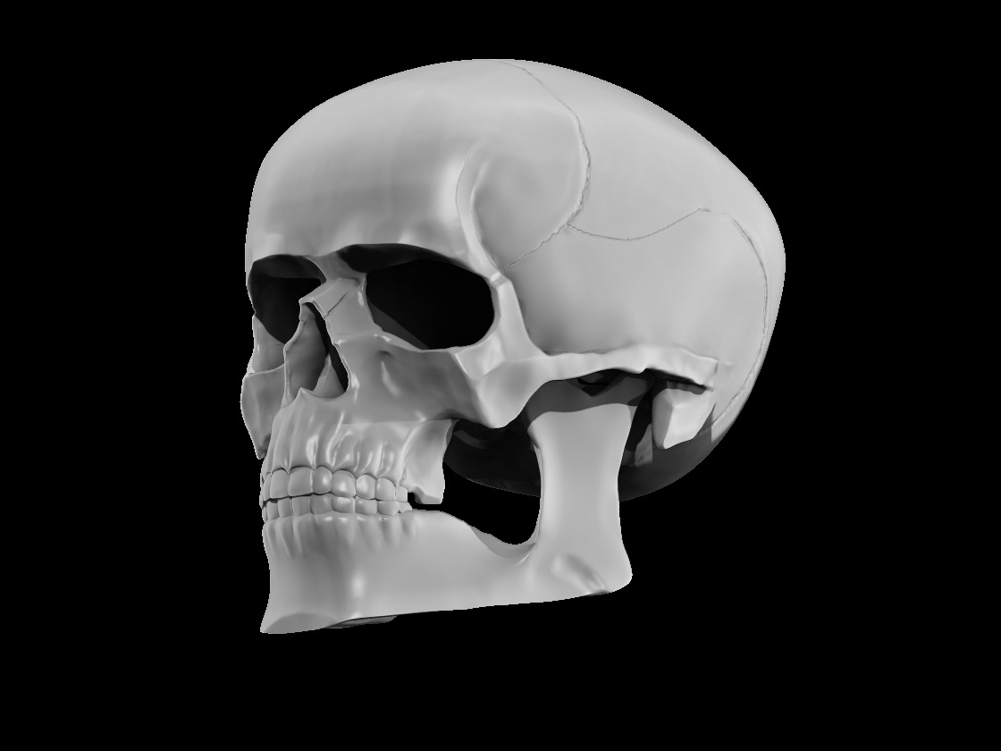 Image may contain: skull, sketch and bone