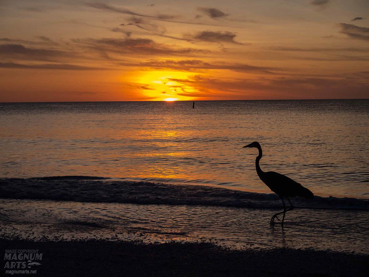 sunset sunsets Gulf of Mexico epcot disney celebration fireworks