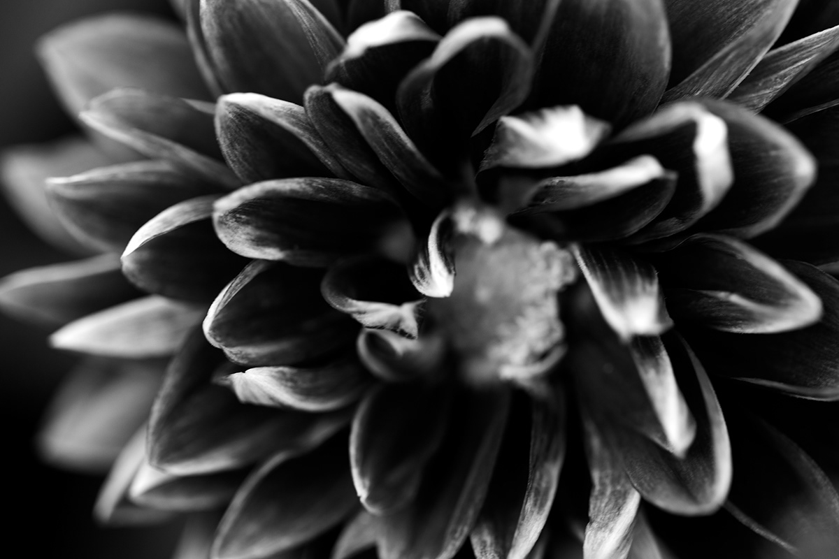 Macro Black And White Flowers On Behance