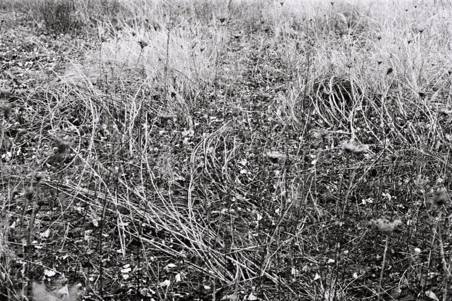 Landscape b/w Nature wander