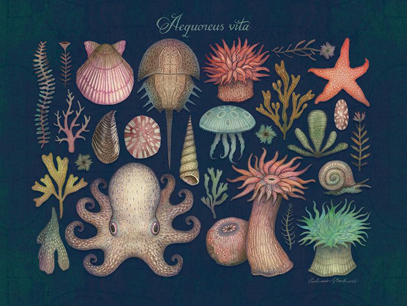 Aequoreus vita illustrations by Vladimir Stankovic