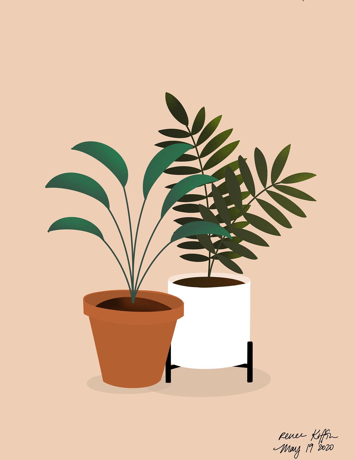 2d Plant Illustrations On Behance