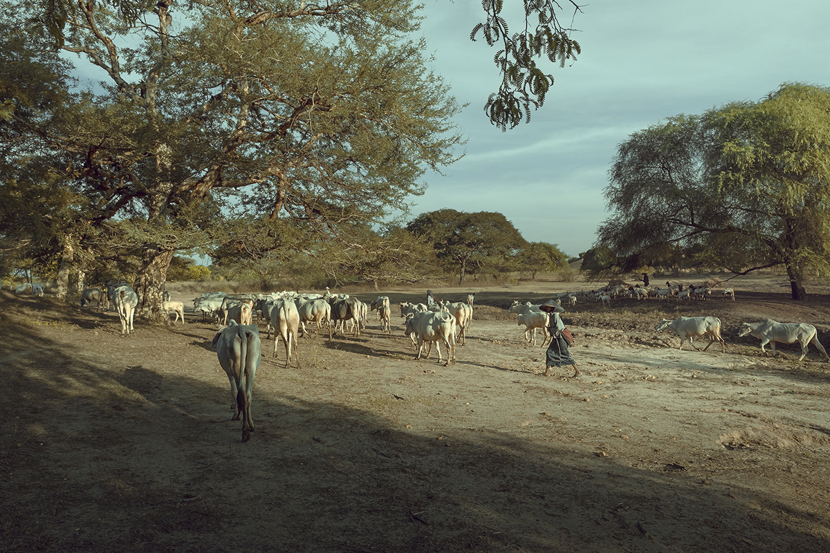 bagan myanmar Travel art Landscape Nature grassland sunset humane