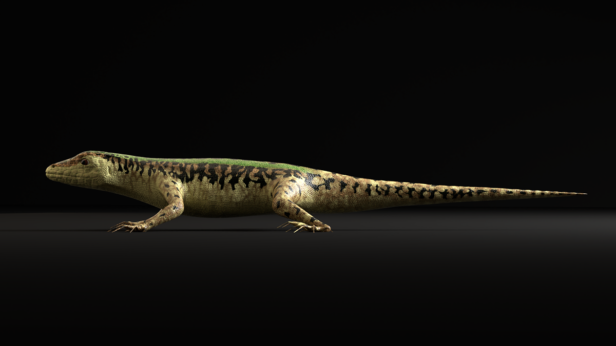 3D Green Lizard- Podarcis Sicula on Student Show