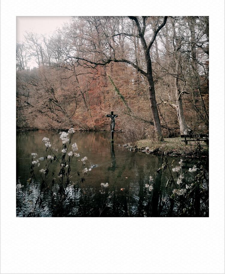Image may contain: tree, water and lake