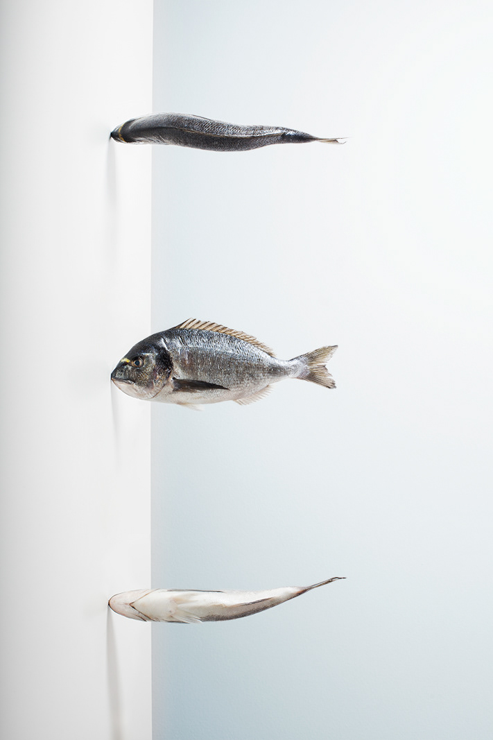 fish Photography  Culinary Still life light blue studio