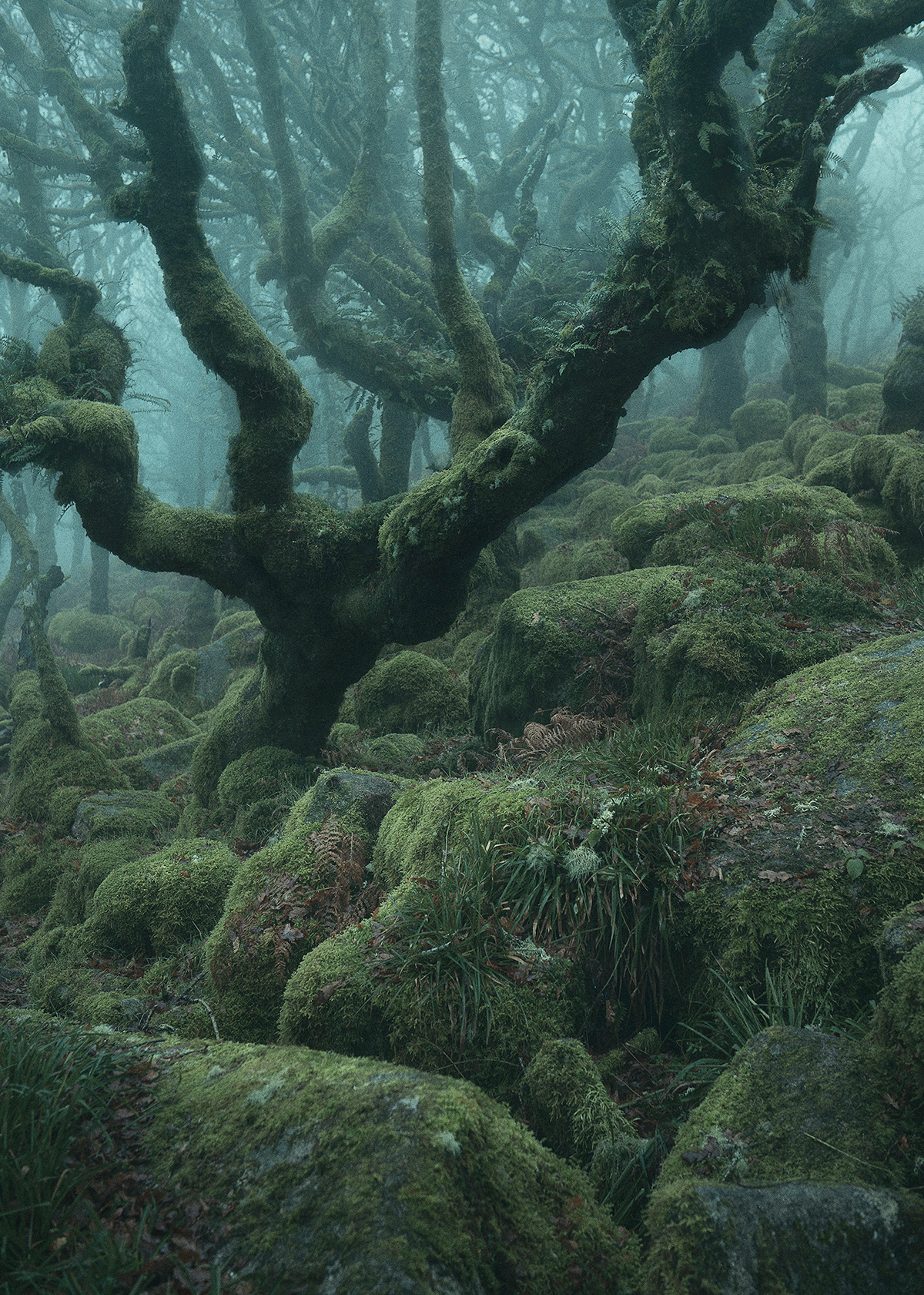 mystical woodland trees fairytale forest Photography  cinematic