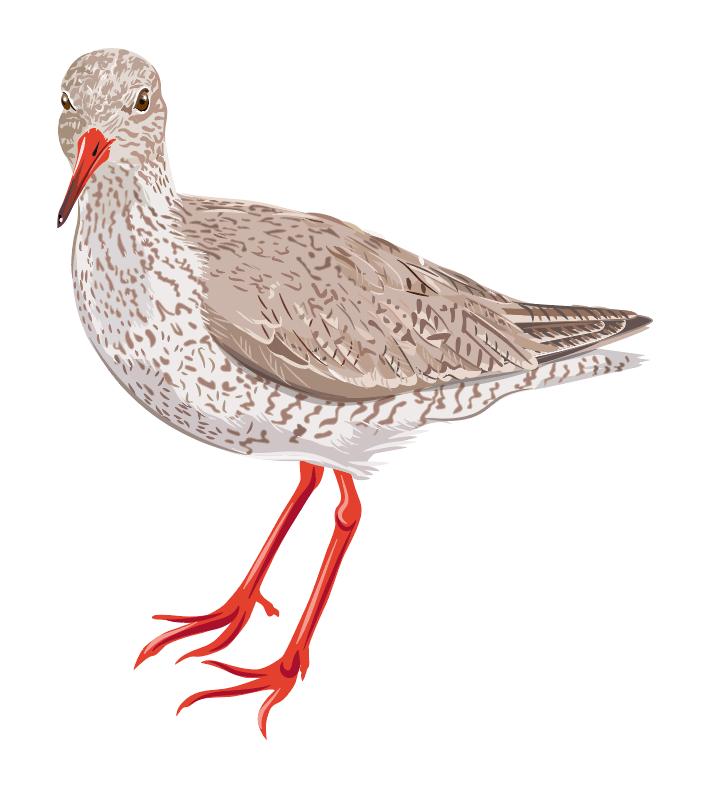 #birds North Sea #drawing #vögel
