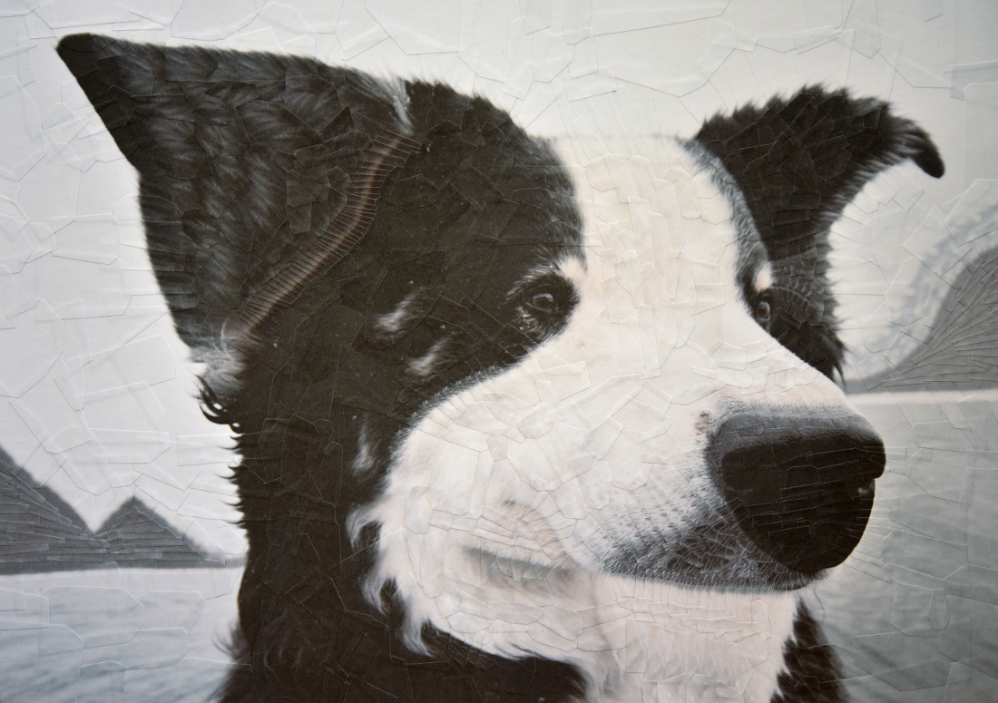 collage paper collage ILLUSTRATION  portraits portrait Cat dog cats dogs