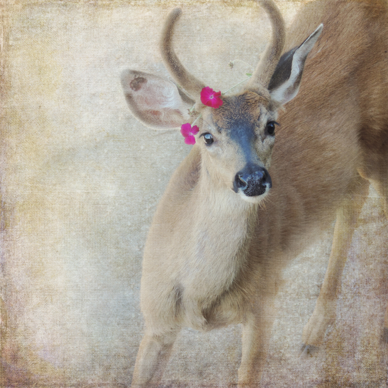 Deer Photography antlers buck fawns