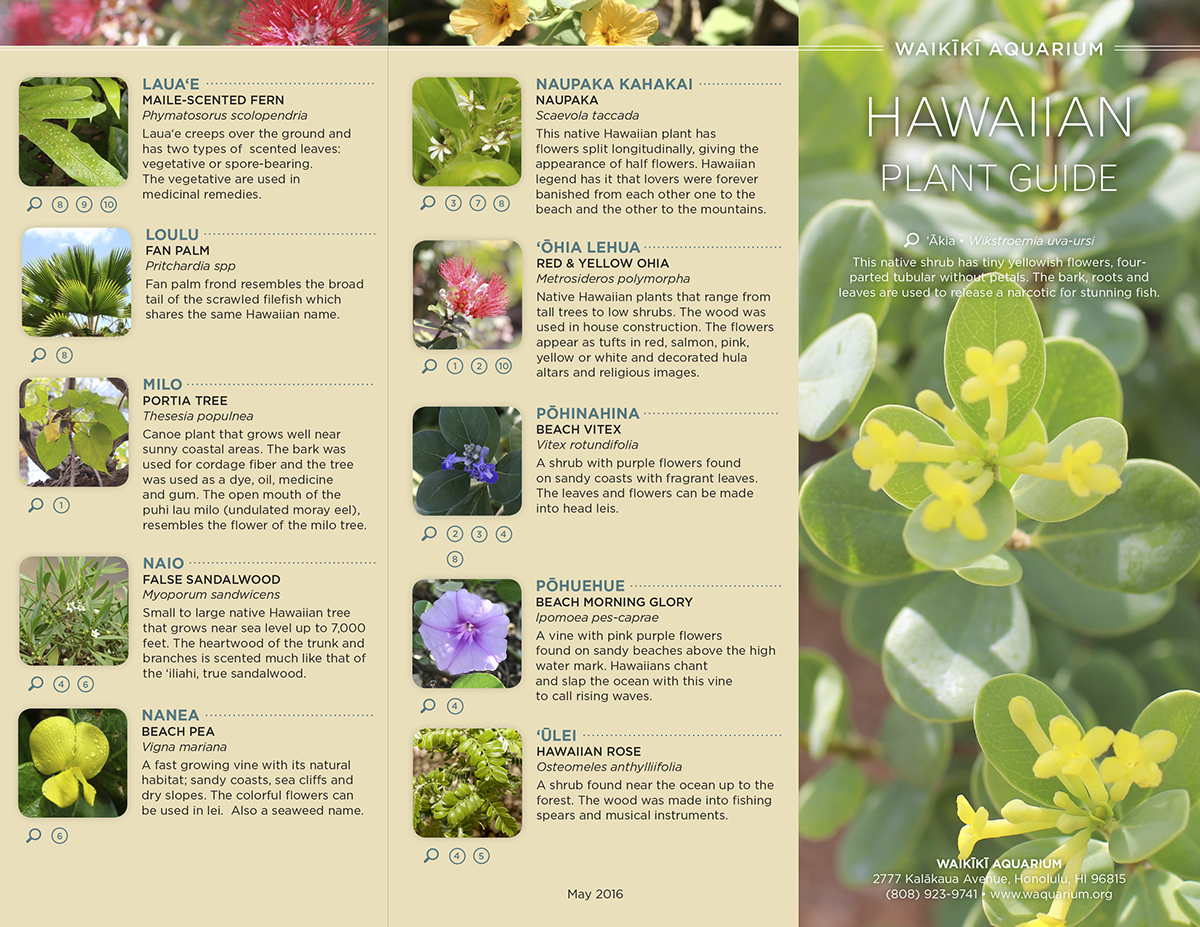 Hawaiian plant guide on behance thank you izmirmasajfo