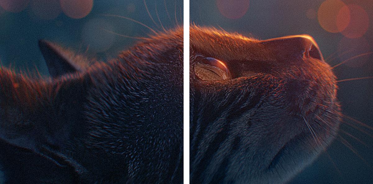 Cat photomanipulation phantasy Breakdown