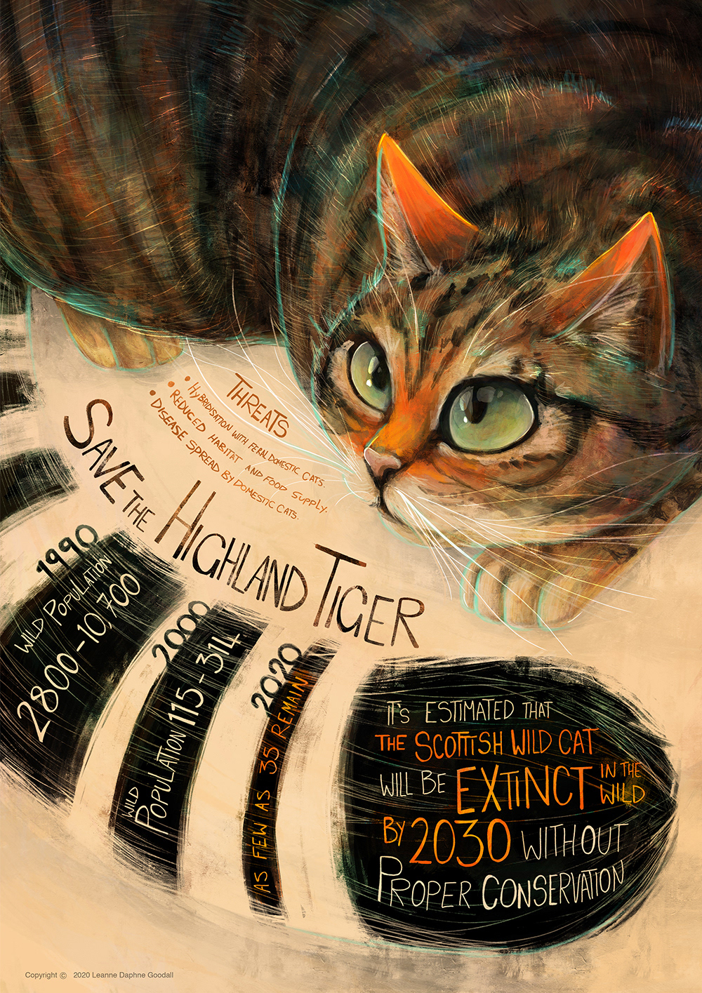 animals cats endangered Illustrated Inforgraphic Inforgraphic leopard tiger wildcat