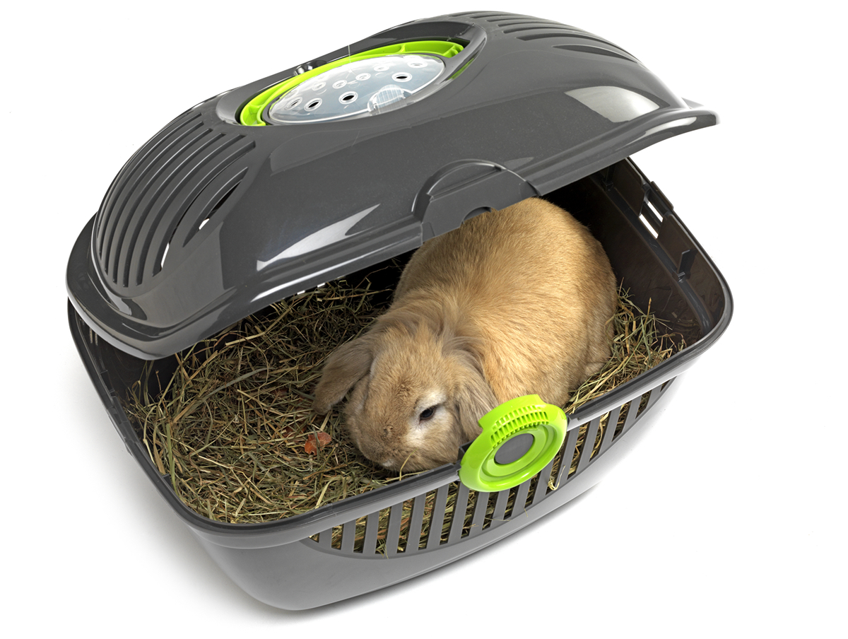 Cat dog rodents transporter plastic animal Pet carrier pet products moderna products box