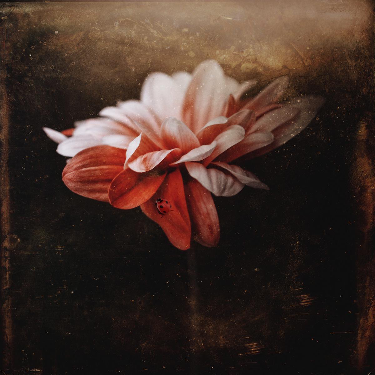 Dark Flowers On Behance