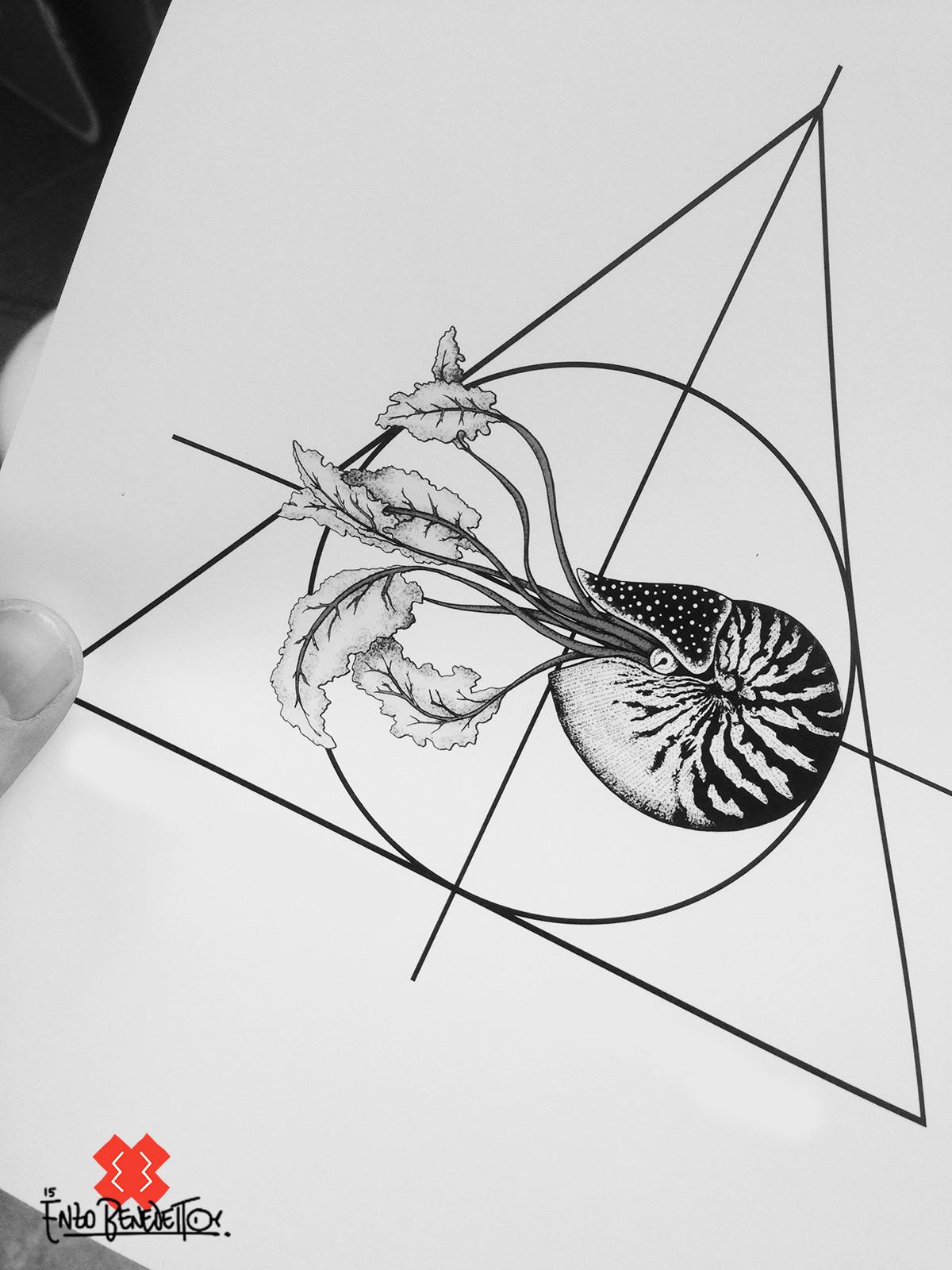 nautilus sezione aurea  Fibonacci golden section
