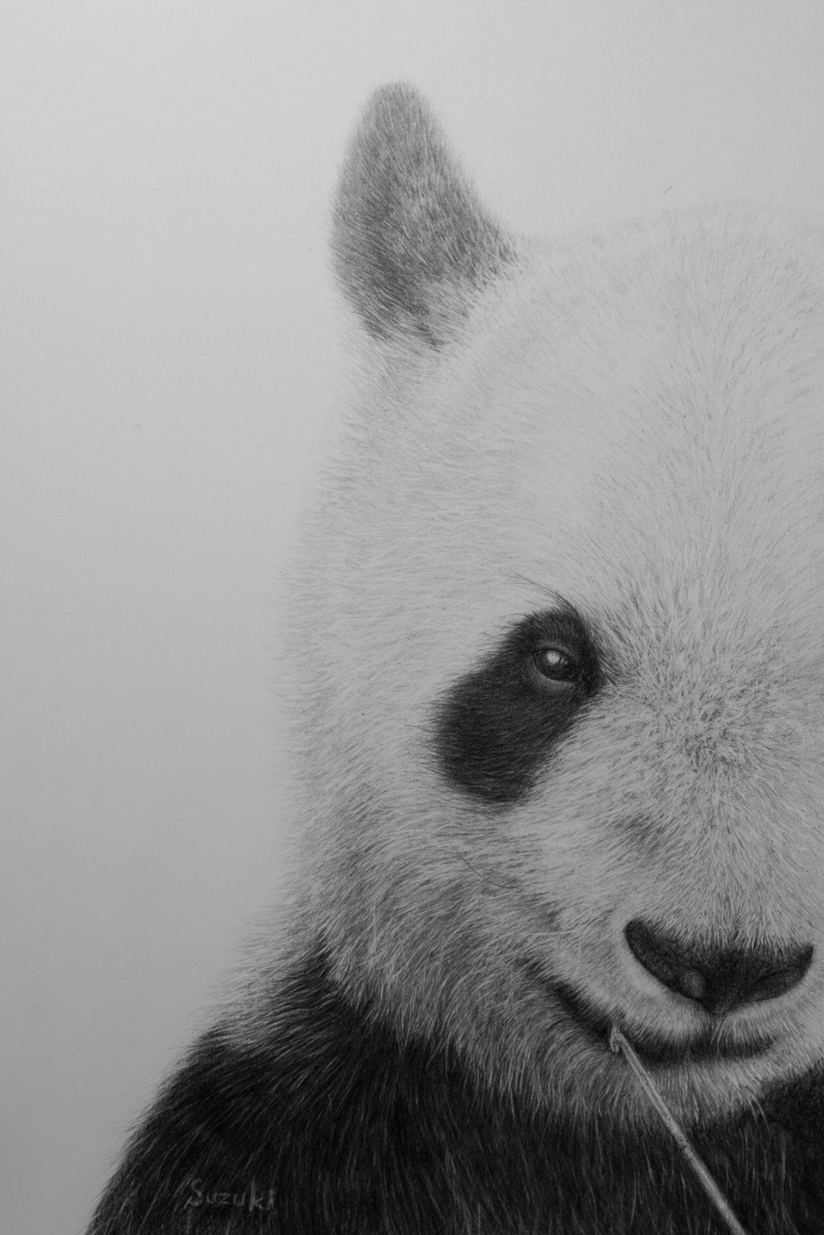 Pencil drawing animal panda on behance