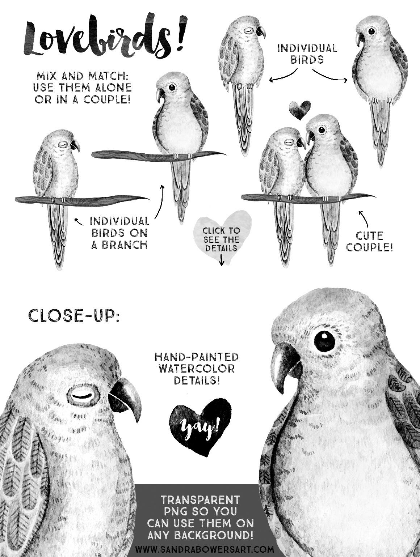 Watercolor Tropical Lovebirds B W Pack On Behance