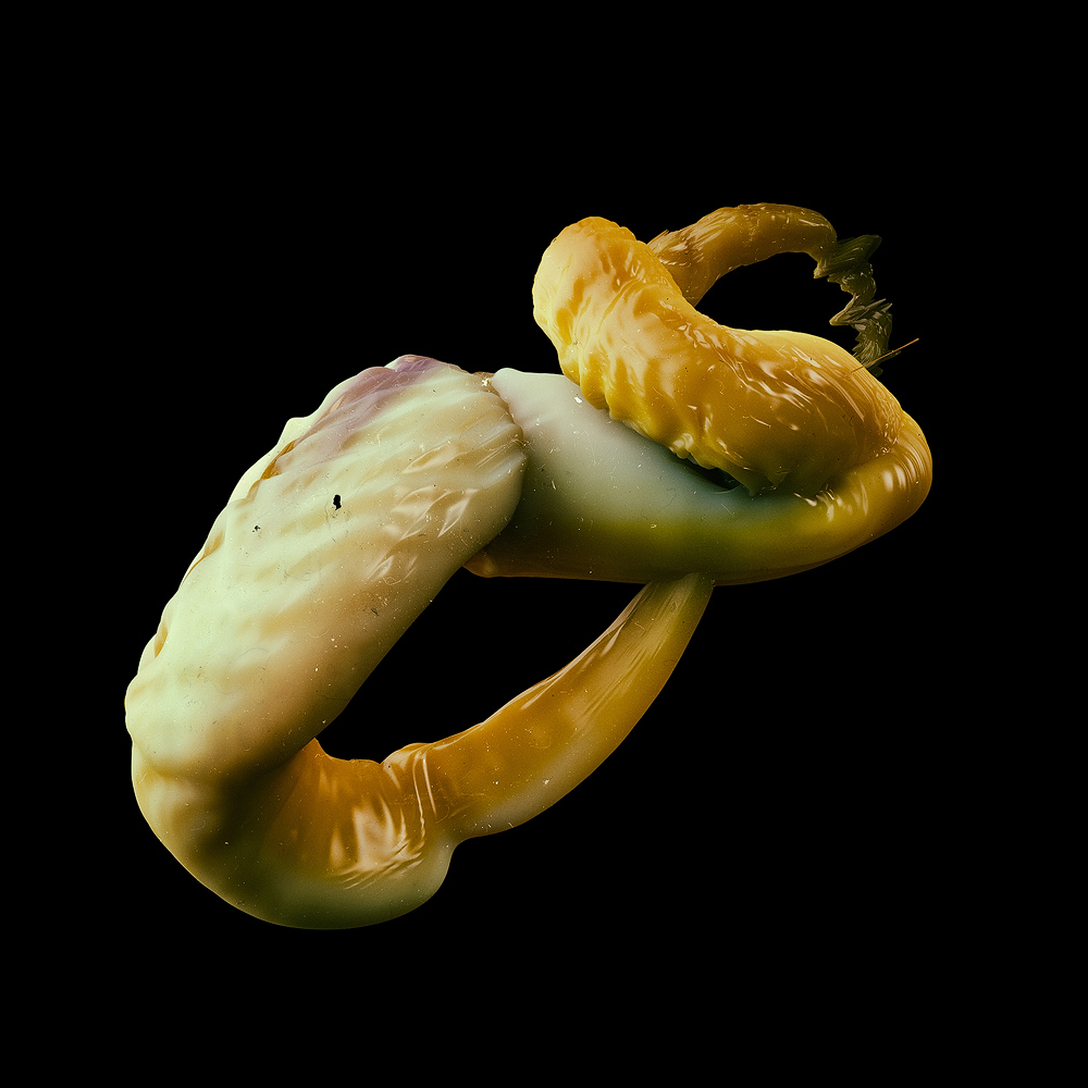 feelers alphabet tentacle appendage abstract 3D organic animal sea