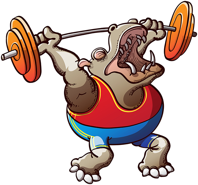 Strong hippopotamus making a big effort ina weightlifting competition