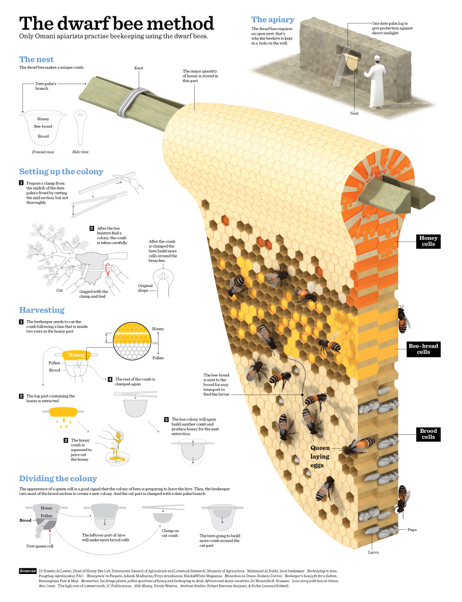 Bienenzucht infographic infografik spaccato visual journalism periodismo visual Schnittzeichnung cutaway Visual Jornalismo Desenho em Corte dessin en coupe 剖面圖 破断図 장면 전환도 3D