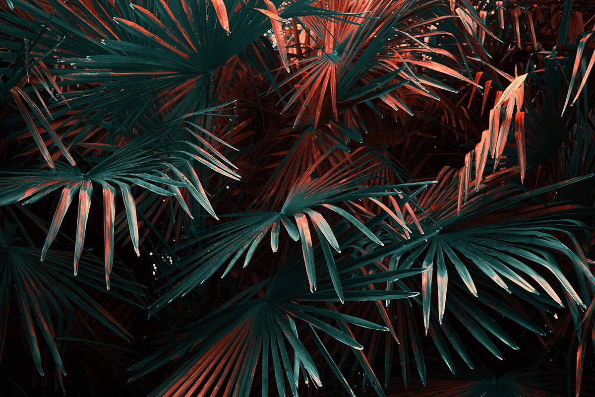 leaves plants botanic fine art art photography surrealism symbolism dark colorful forest