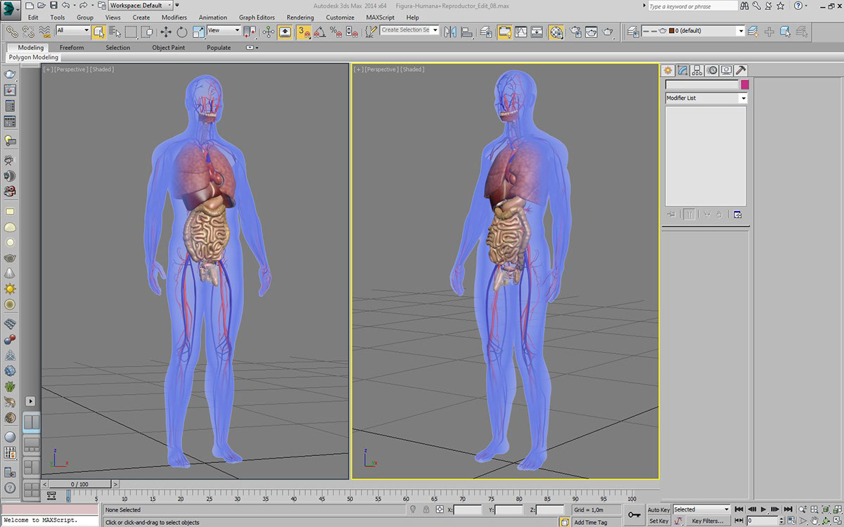 3D Human Anatomy (Male) on Behance