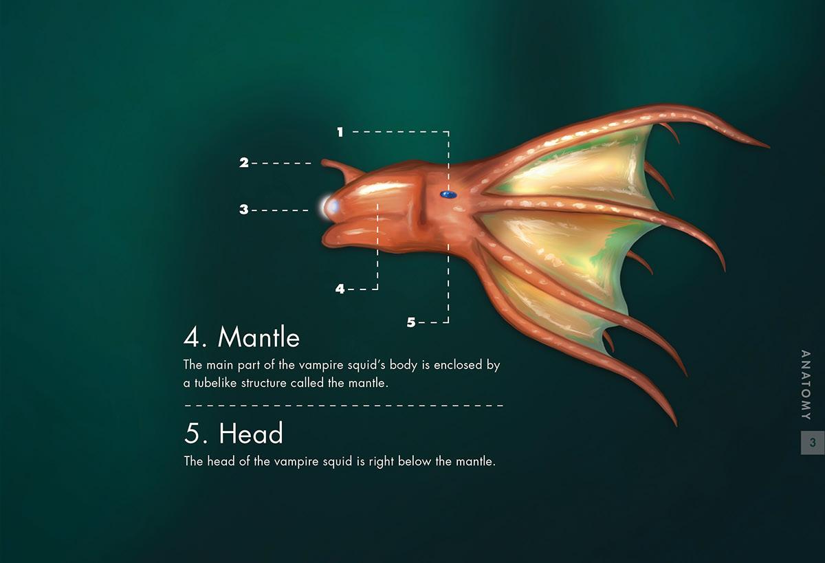 Vampire squid anatomy