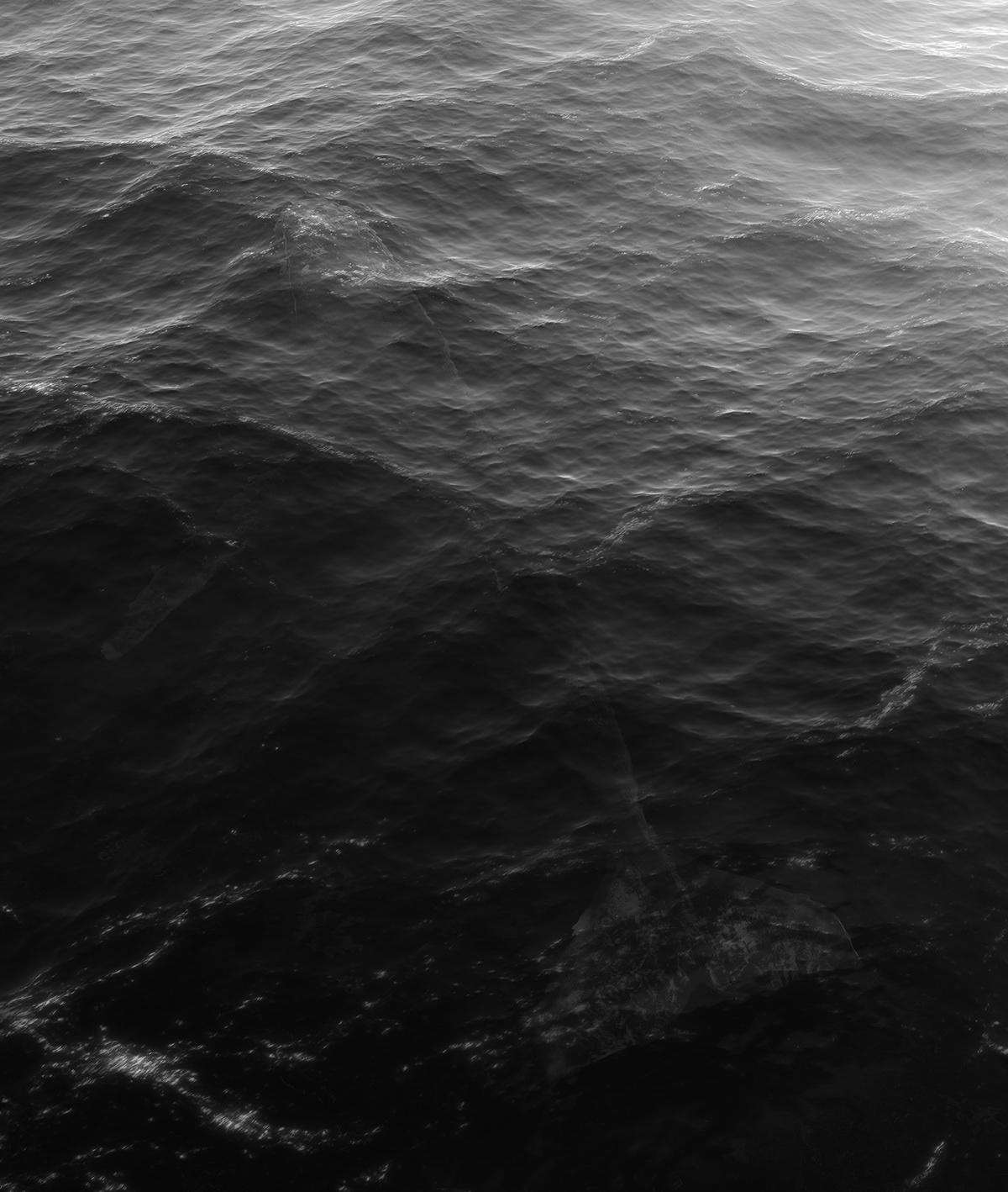 water Render trees lake sea waves Whale Ocean rocks stones