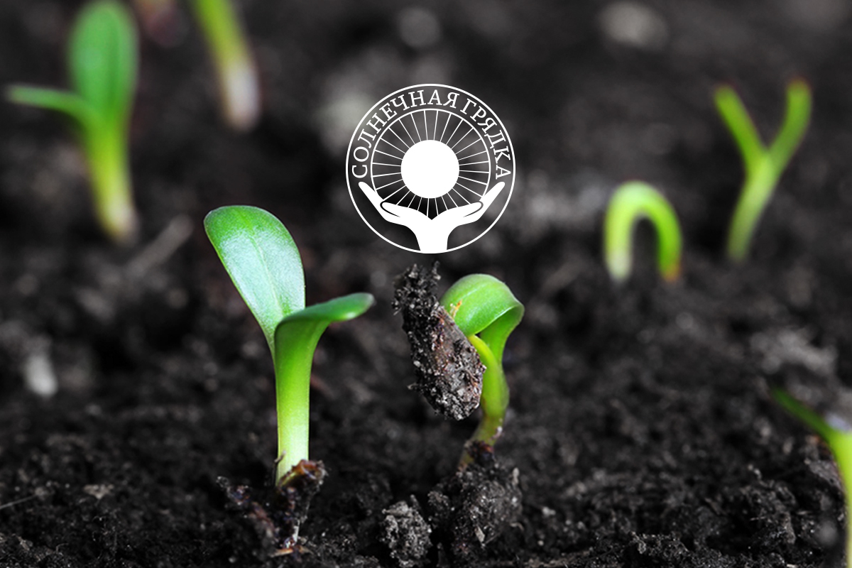 Как правильно посадить семена для рассады