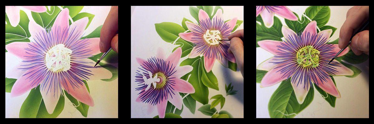 botanical ILLUSTRATION  flower Drawing  Nature floral pattern handmade inspiration Fashion