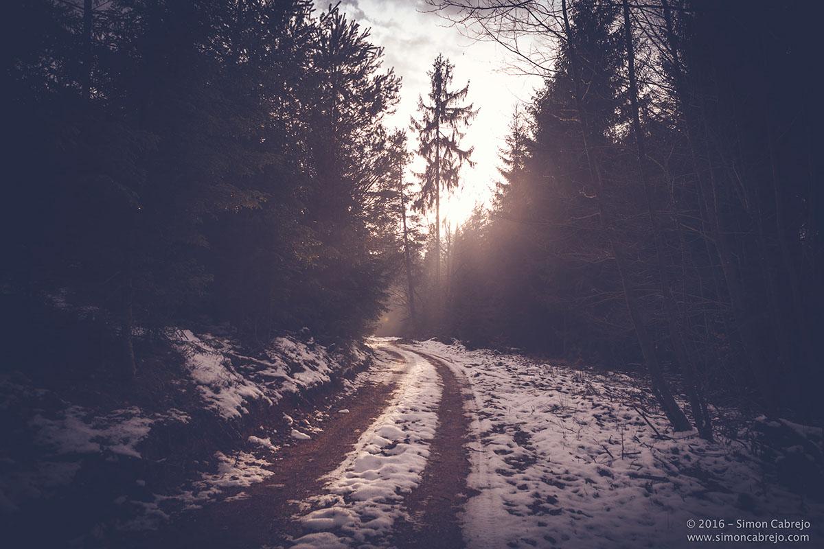 Landscape forest light winter
