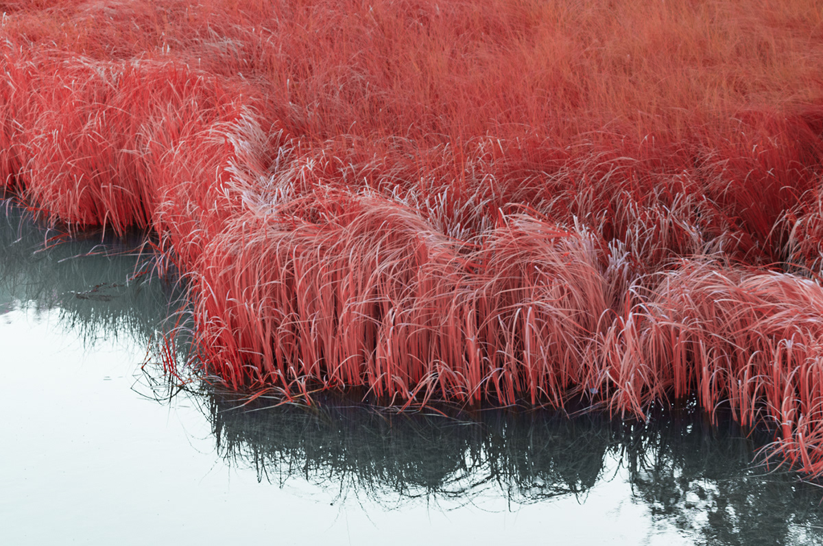 Digital Art  experimental full spectrum infrared infrared photography IR landscape photography Nature red structures