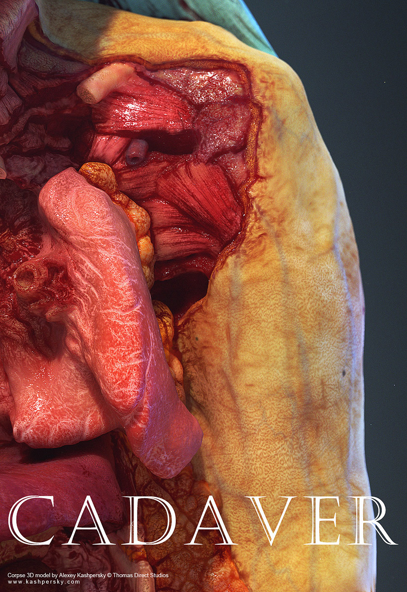 Human Cadaver 3d Model On Behance