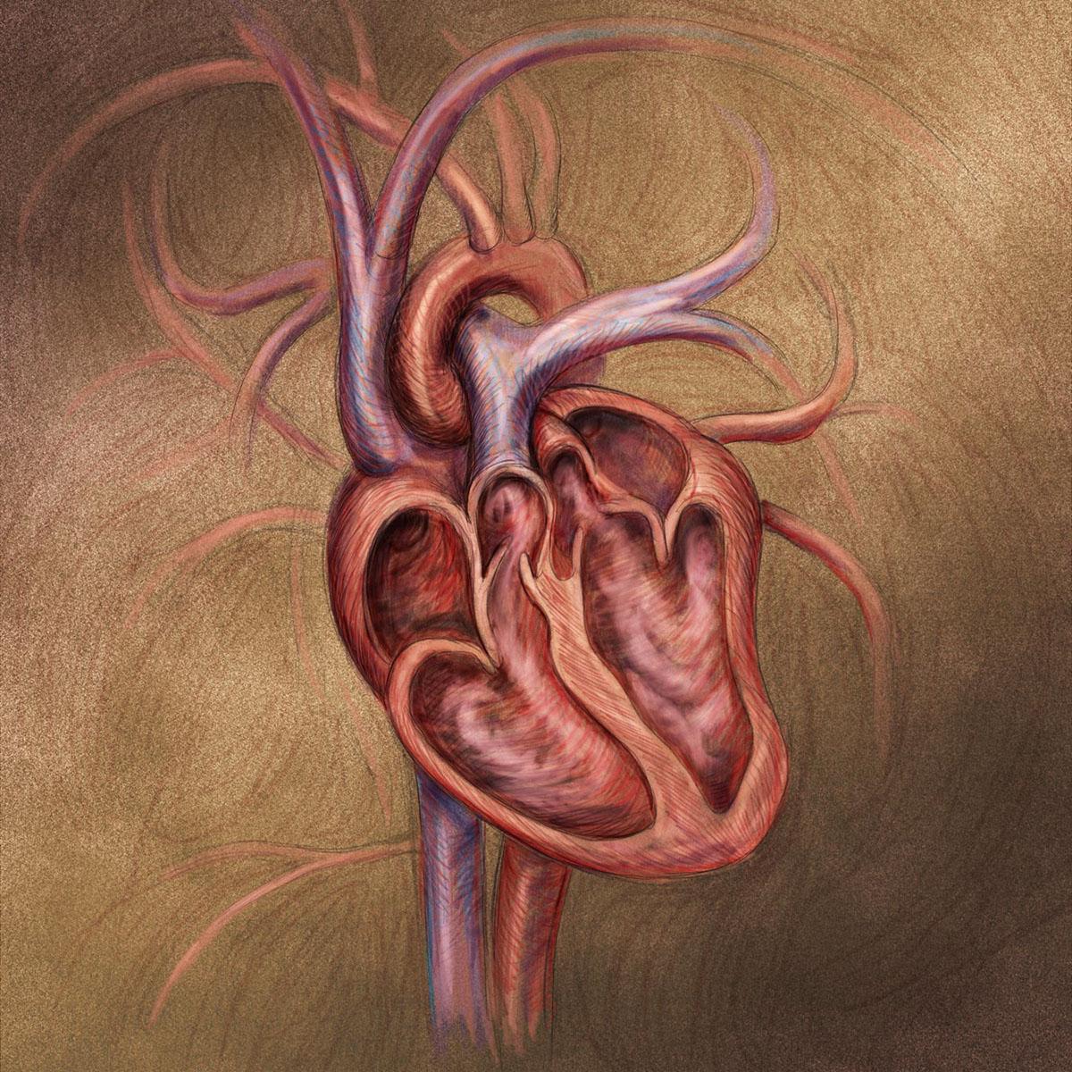 Drawn Medical Art on Behance